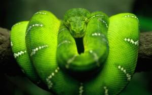serpentg1
